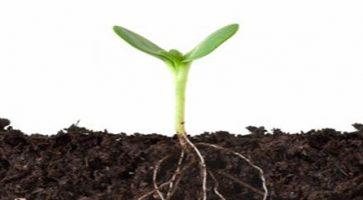 Recepti za hranljive substrate od vrtne zemlje
