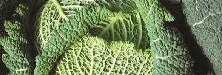 Kasni kelj (Brassica oleracea var. sabauda) tehnika gajenja, kalendarski prikaz radova sa spiskom bolesti i štetočina