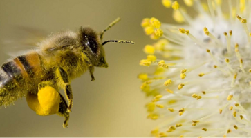 Pčele se moraju čuvati jer nas one čuvaju od ponovnih sankcija