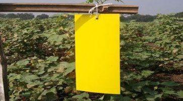 Boja kao ekološko sredstvo za rasterivanje insekata