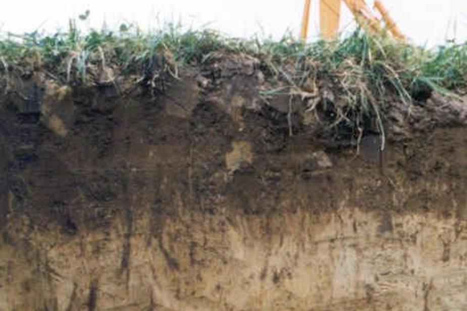 Dobar humusni sloj je tamne boje od 30 do 50, pa i preko, centimetara dubine